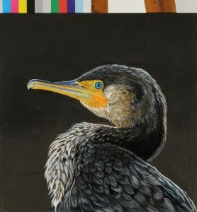 cormoran painted by me on jan 2013 acrilic on canvas #paola consani