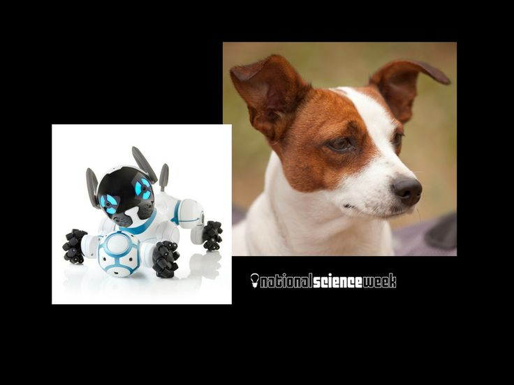 National Science Week 2016: This K-3 interactive slideshow asks students to compare Chip the robotic dog with Rusty the Jack Russell.