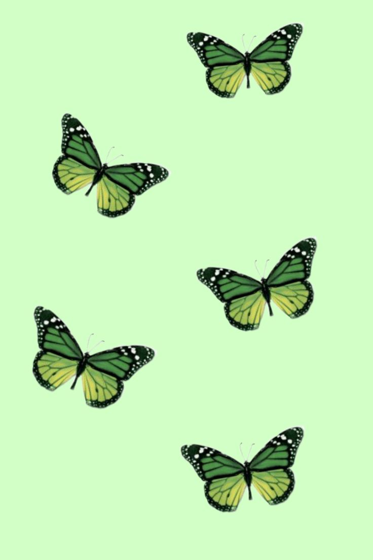 Fairycore, also known as fairywave or faecore, is an aesthetic surrounding the theme of nature, soft pastels, butterflies, magic, flowers, soft animals like. Pin by 𝑀𝐼𝐶𝐻𝐸𝐿𝐿𝐸 on Wallpapers | Dark green aesthetic ...