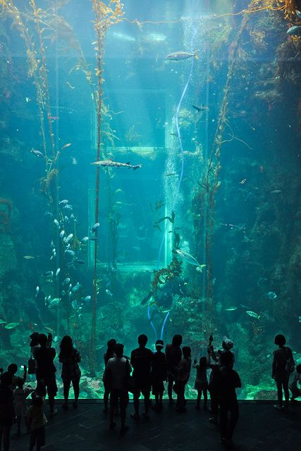 The National Museum of Marine Biology and Aquarium, Kenting, Taiwan. via Flickr