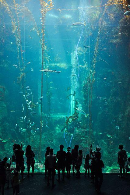 The National Museum of Marine Biology and Aquarium, Kenting, Taiwan.  via Flickr