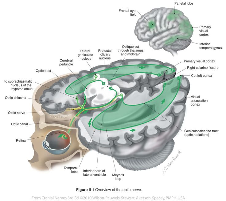 33 best Olfactory system images on Pinterest | Cranial nerves ...