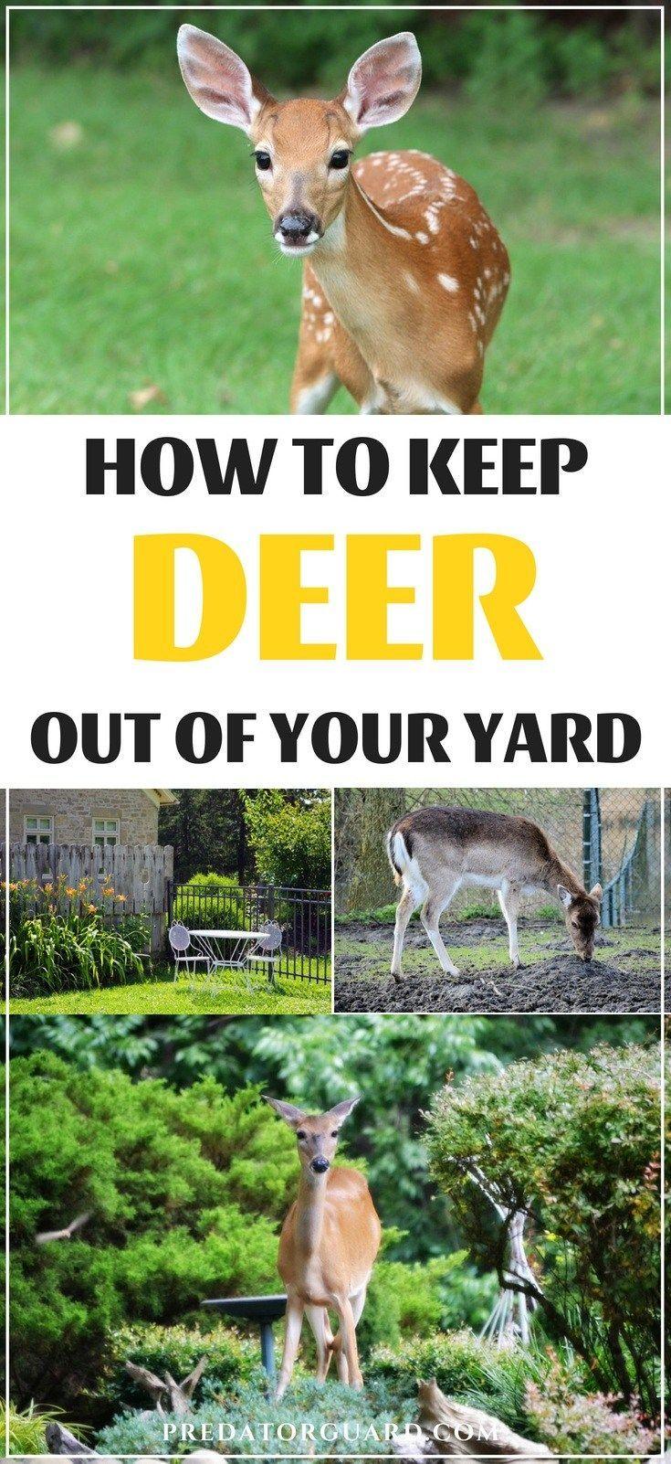 How To Keep Deer Out Of Your Yard Deer Resistant Garden Slugs