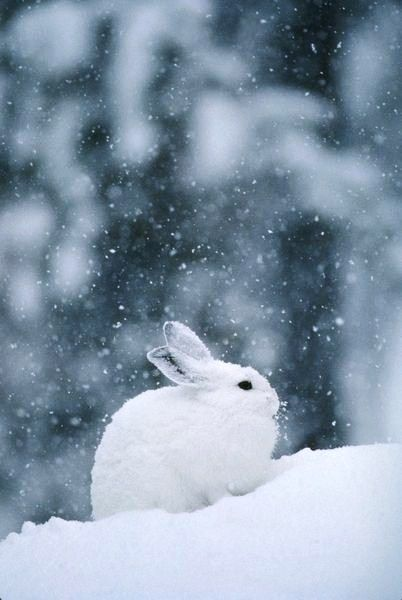 Rabbit Bunny Konijn Kaninchen