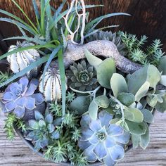 Monochromatic... /search/?q=%23blue&rs=hashtag /search/?q=%23succulent&rs=hashtag /explore/succulents/ /search/?q=%23succulove&rs=hashtag /search/?q=%23succulentgarden&rs=hashtag /search/?q=%23succucolor&rs=hashtag /search/?q=%23succulentlove&rs=hashtag /search/?q=%23succulents_only&rs=hashtag /search/?q=%23succulentsofinstagram&rs=hashtag /search/?q=%23instasucculent&rs=hashtag /search/?q=%23mygarden&rs=hashtag /search/?q=%23garden&rs=hashtag /search/?q=%23gardens&rs=hashtag…