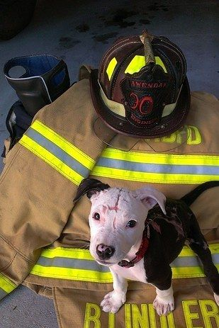 Jake, the puppy who was rescued from a fire in 2014 and now works as a firefighter. | The 17 Most Totally Adorable Puppies Of 2016