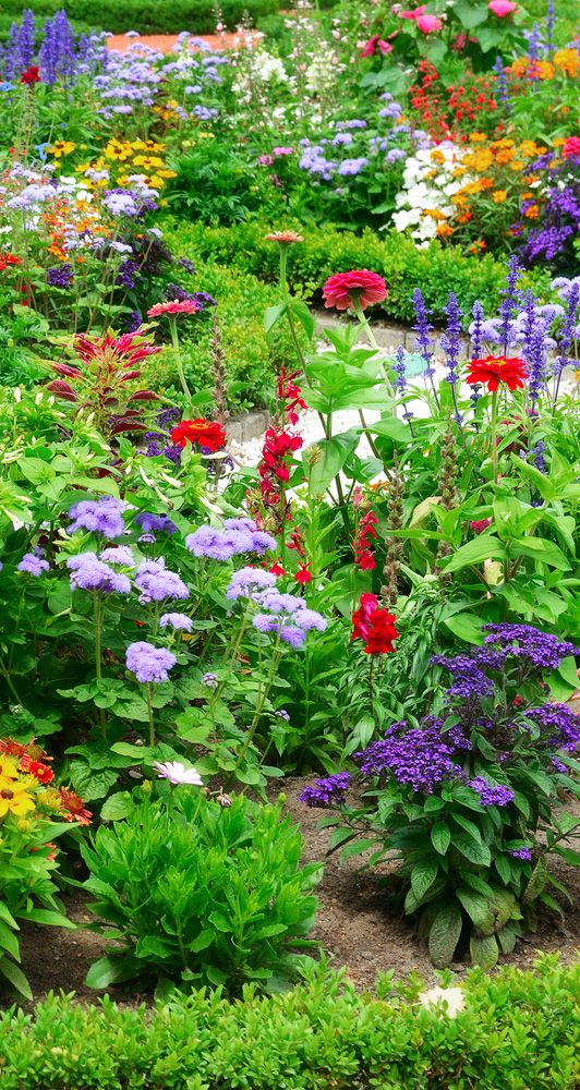 Stunning colourful garden border