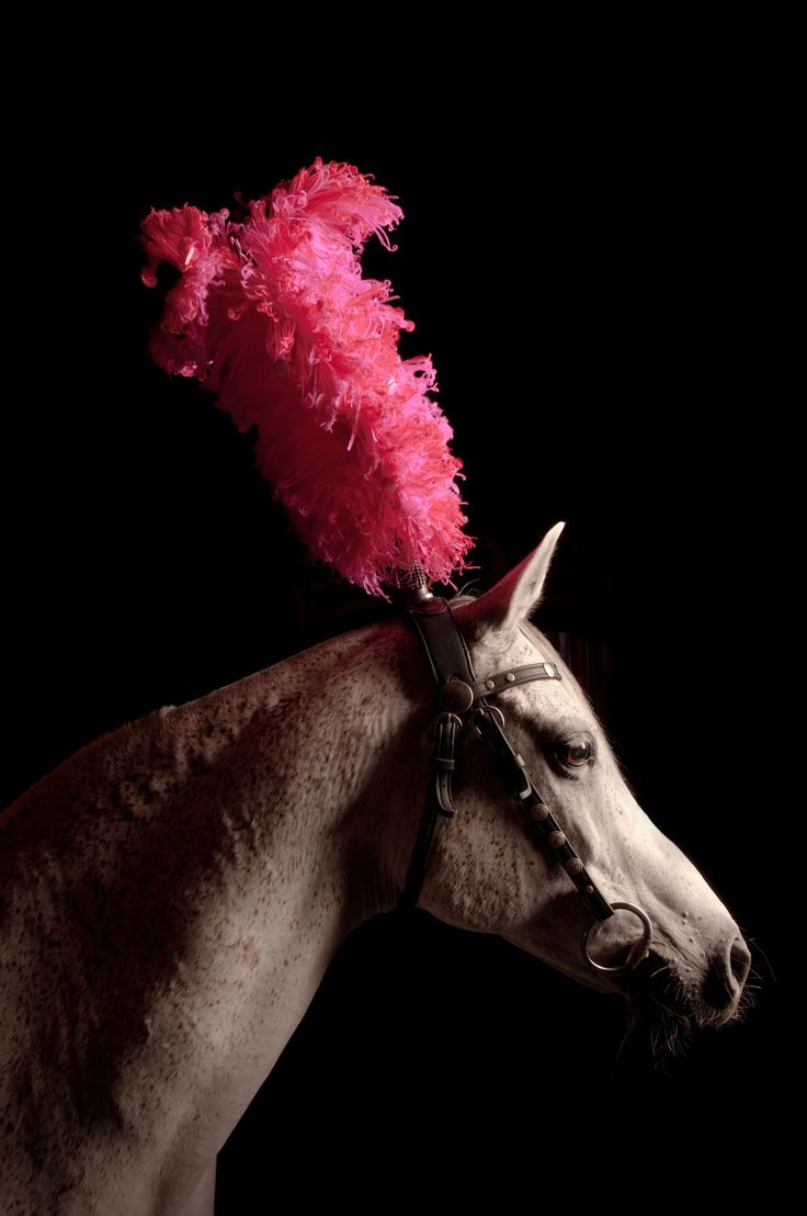 Circus pony! - This is what I would do for a costume class at a horse show. :)