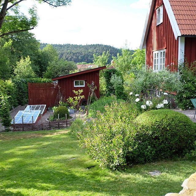 June #minträdgård #trädgård #trädgårdsinspiration #mygarden #garden #gardening