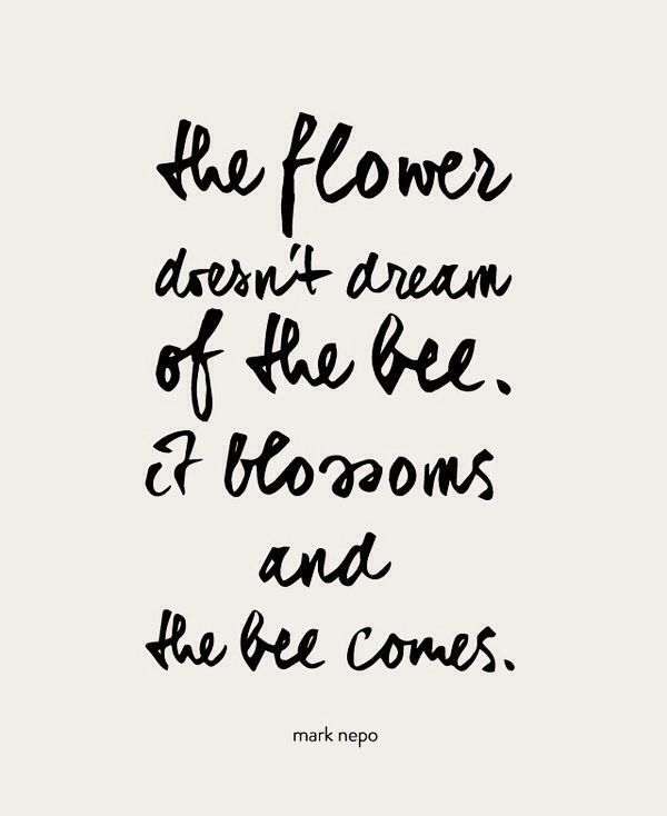 I spent far too many years dreaming of the bee when I should have just bloomed like I was created to.