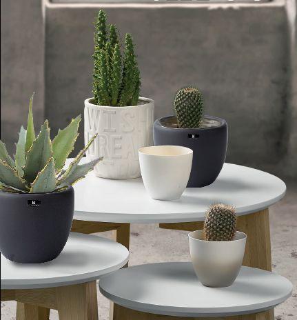 BOVICTUS, Vasi, Tavolini Tanti accessori e oggetti di design per regalare alla tua casa un tocco di glamour e di gusto! #design #glamour #bovictus #mvhsrl #vase #table #plants #homedecor #homedesign #interiordesign