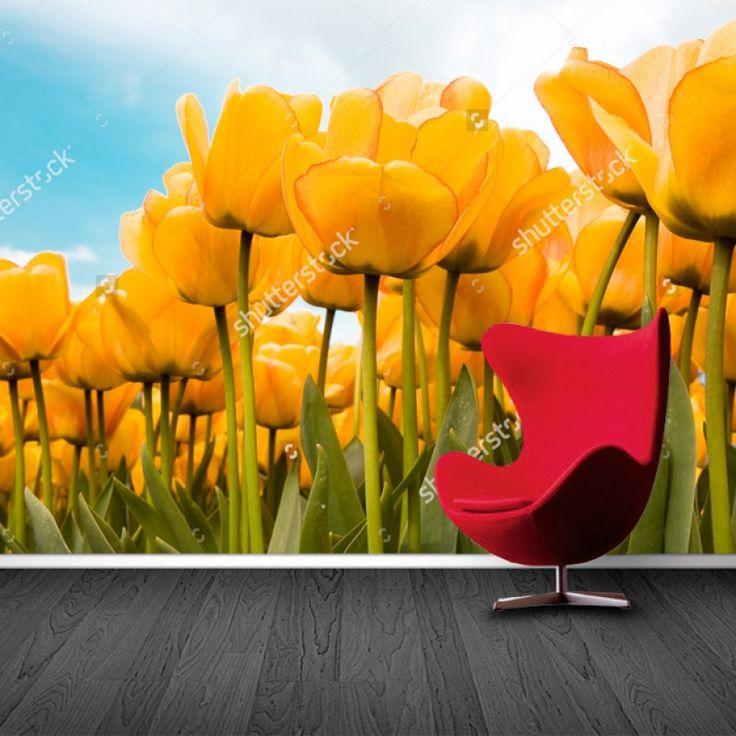 Fotobehang Hollandse gele tulpen | Maak het jezelf eenvoudig en bestel fotobehang voorzien van een lijmlaag bij YouPri om zo gemakkelijk jouw woonruimte een nieuwe stijl te geven. Voor het behangen heb je alleen water nodig!   #behang #fotobehang #print #opdruk #afbeelding #diy #behangen #geel #holland #nederland #tulpen #bloemen #lente