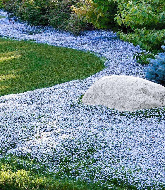 Polsterstauden Blumenteppich