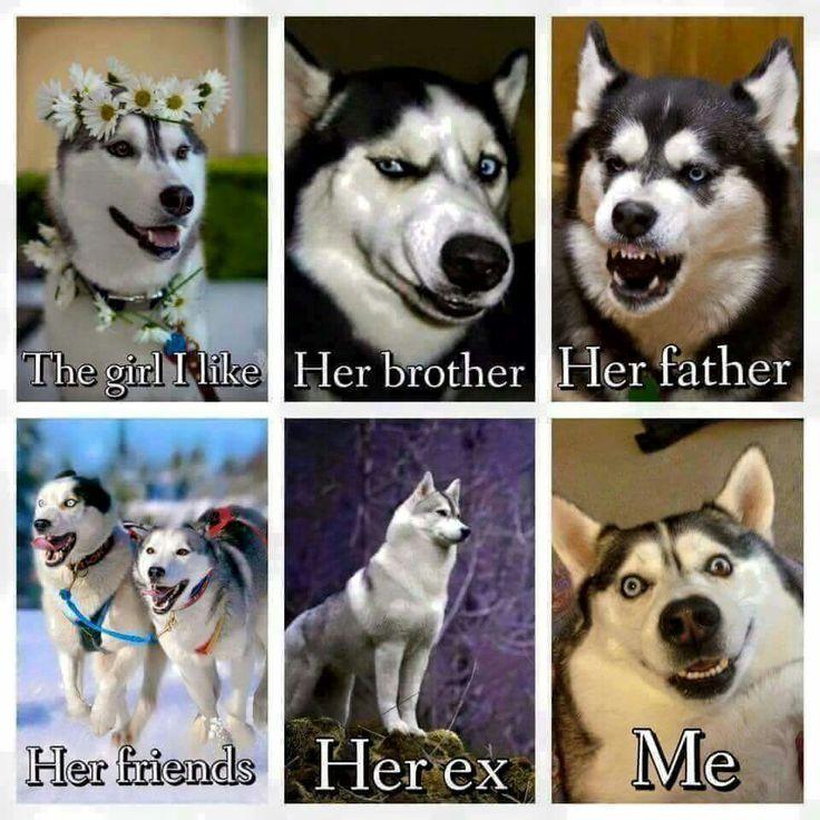 visit www.amazingdogtales.com for the best funny dog joke pics,inspirational dog stories and dog news.... Siberian Husky social circles. More