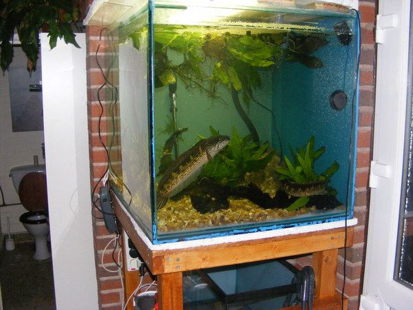 17 best ideas about cheap fish tanks on pinterest fish for Cheap big fish tanks