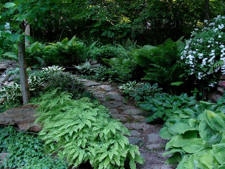 32 curated woodland garden ideas by aimee7494 gardens for Woodland garden designs