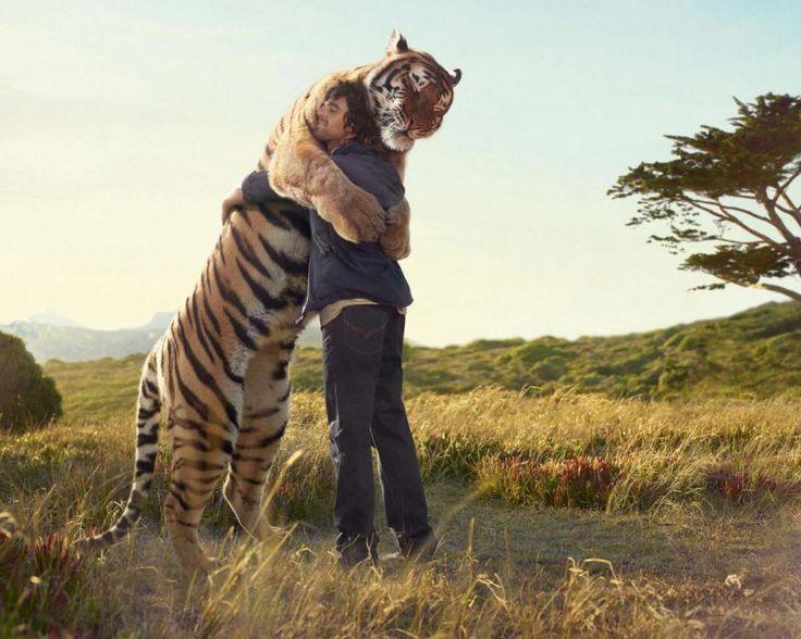 Moments Tendres de Chats, Chiens et autres Animaux qui se font des Câlins - Ici, un Homme et un Tigre