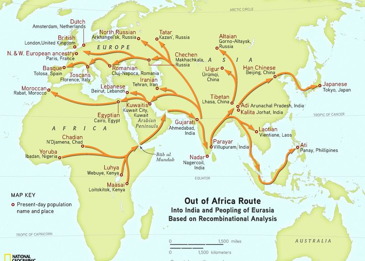 30 best anthropology images on pinterest history human evolution the genographic project confirms humans migrated out of africa through arabia gumiabroncs