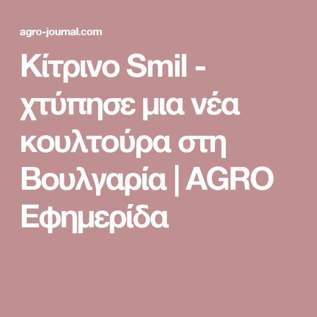 Κίτρινο Smil - χτύπησε μια νέα κουλτούρα στη Βουλγαρία |  AGRO Εφημερίδα