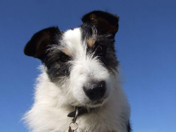 Why Does My Dog Suddenly Have a Head Tilt? Dogs, Dog