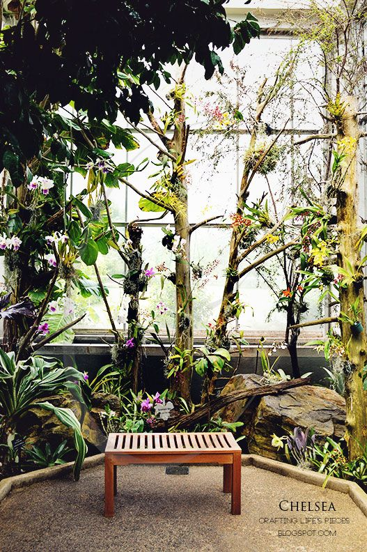 Crafting Life's Pieces: Daniel Stowe Botanical Garden, Orchid Conservatory