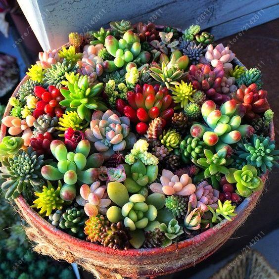 Succulent 200 pcs uncommon nouveau arrivent semences succulentes plantes sorts mixtes bonsaï fleur pour l. a. maison jardin