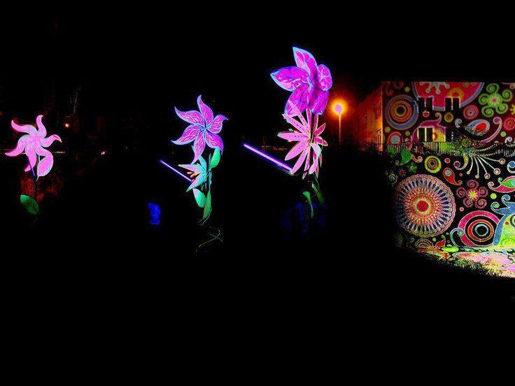 Fák, bokrok - fényfürdő - Night Projection fényfestés  Y-Production 3rd Birthday party (Sesto Sento & Gataka) Night Projection raypainting  További fotók: https://www.facebook.com/media/set/?set=a.492177674127249.116992.216863264992026&type=3  #yproduction #birthday #birthdayparty #gataka #nightprojection #raypainting