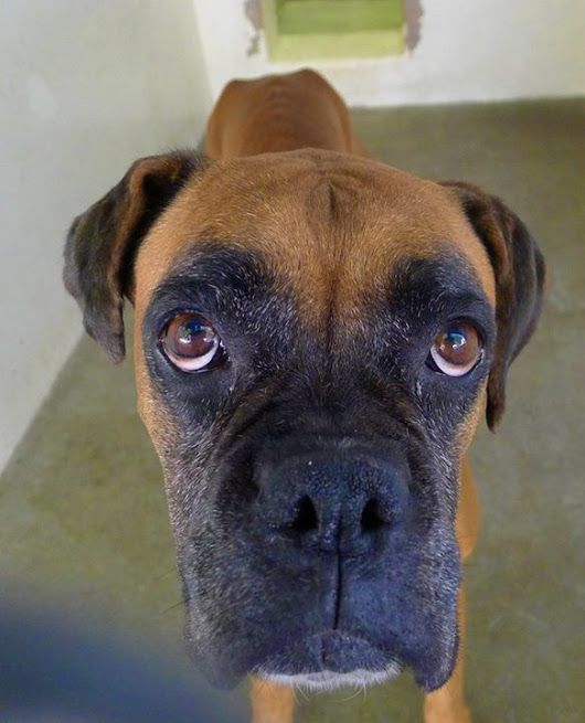 Abandoned at her empty home, Boxer waited on old mattress for family's return...
