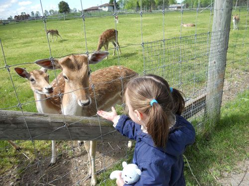 Make some new friends at the Elmvale Jungle Zoo