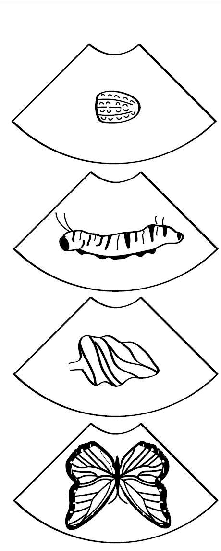 mikapanteleon-PawakomastoNhpiagwgeio: Οι πεταλούδες της άνοιξης (2)
