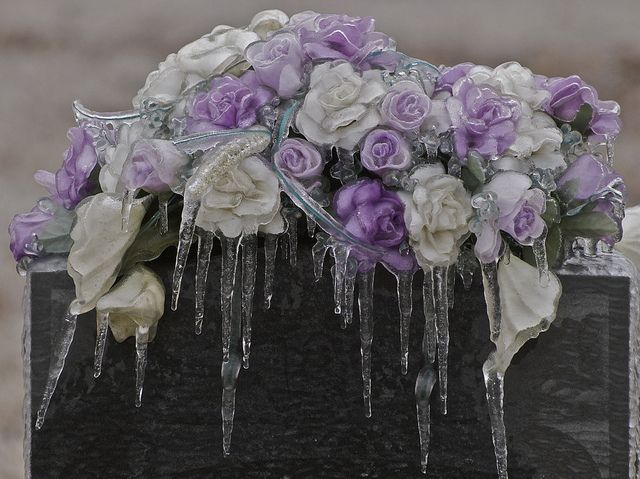 malformalady:  Cemetery flowers after ice storm, Westwood Cemetery Photo credit: Peter Fricke