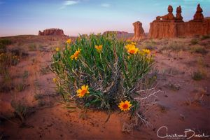 Flowers And Three Sisters