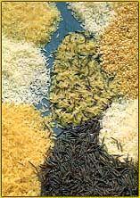 Salada de Endívias, Morangos e Espargos, receitas