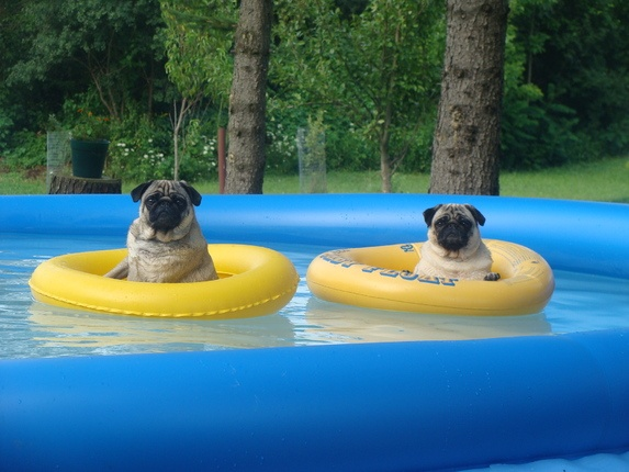 44 best dog days of summer images on pinterest for Cute pool pictures