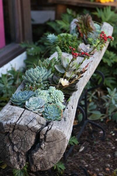 Old Log Turned into a Succulent Garden