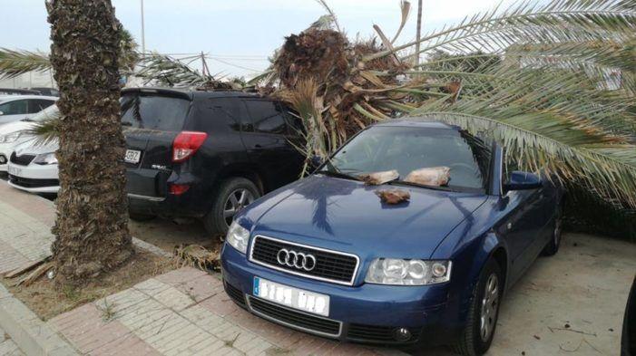 A medio día de este domingo se produjo la caída de una palmera en un lugar muy cercano del Camping de Torre del Mar, que produjo daños a un vehículo que estaba estacionado.   #mal estado #palmera #vehiculo