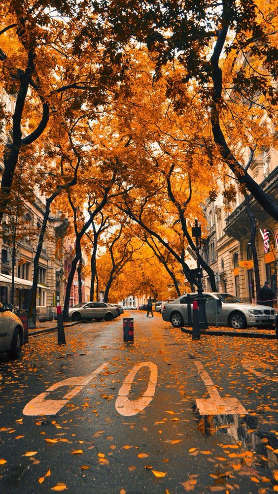Fall iPhone Wallpapers – 30 Cute Fall iPhone Background Ideas for FREE Download