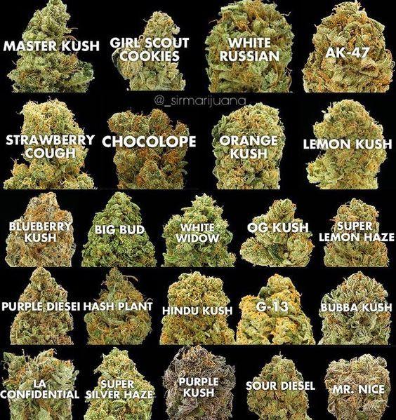We grow and distribute various strains of marijuana such as White Widow,sour Diesel,Hawaii-Skunk,Hindu Kush,afghani kush,Super Silver Haze,OG Kush,Lemon haze,granddaddy purple,Super Skunk,AK 47,Blueberry kush,Strawberry kush,blue dream,Moonrocks,shatter,wax and more Text....(770)966-6363 website:www.chrismarijuanadispensary.com