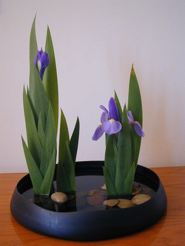 Paesaggio acquaticoGlasses Flower, Vintage Flower, Ikebana Arrangements, Floral Design, Japan Art, Flower Arrangements, Iris, Floral Arrangements, Japanese Flower