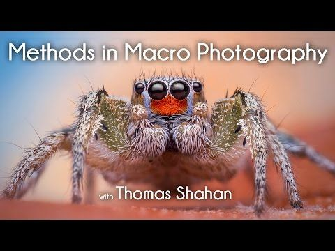 Expert Techniques for Beautiful Insect Macro Photography – PictureCorrect