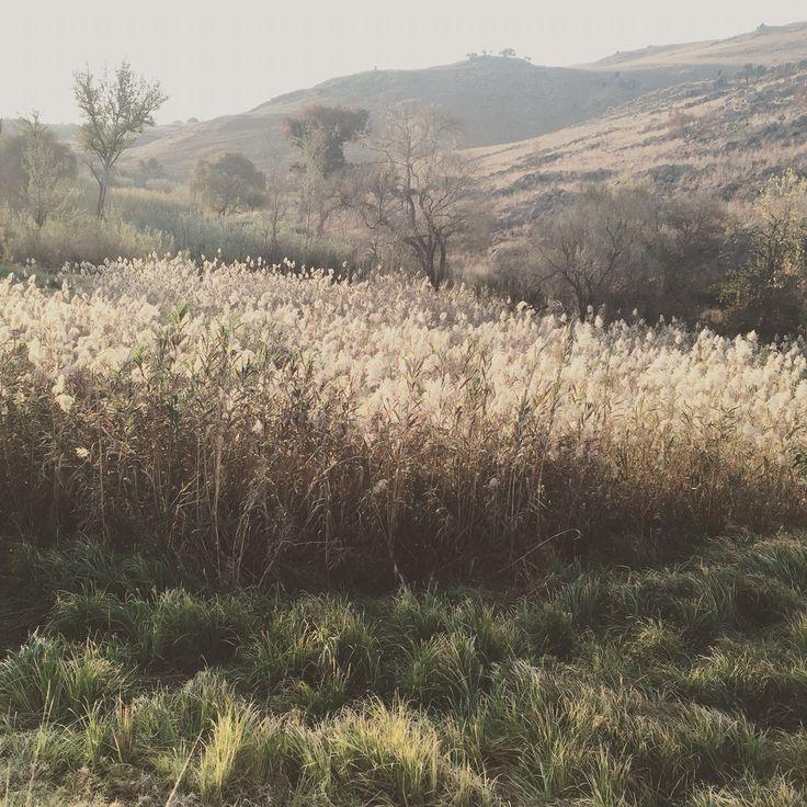Magaliesberg grass, South Africa