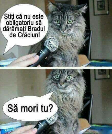 Pisicile si bradul