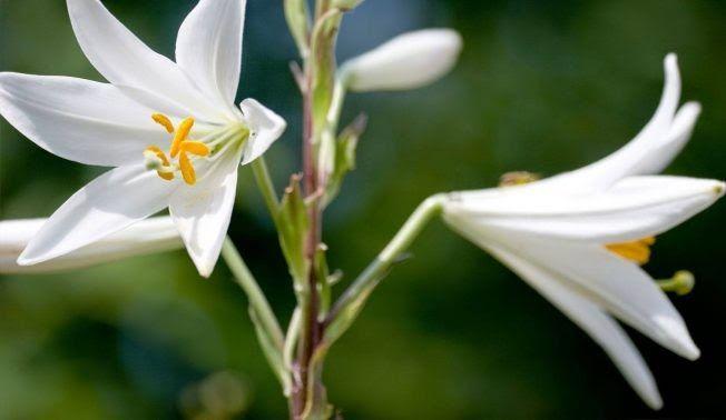 32 Gambar Tumbuhan Bunga Fungsi Bunga Pada Tumbuhan Download Gambar Gratis Merah Kelopak Putik Serbuk Sari Musim Semi Downlo Di 2020 Bunga Menanam Bunga Tanaman