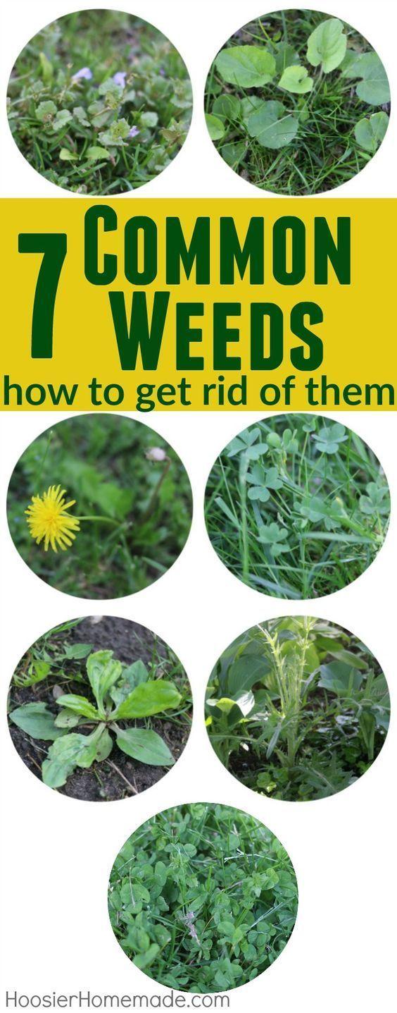 78 best garden images on pinterest gardening tips outdoor