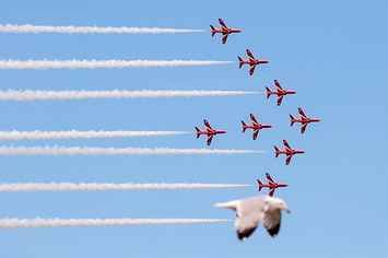 A Seagull Photobombed The Red Arrows And The Image Went Viral