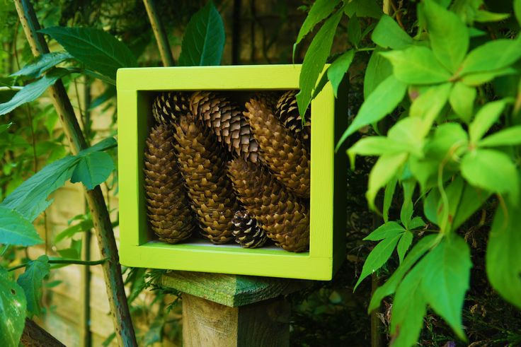 The Pine Cone Hotel £9.99 from www.bughotel.co.uk