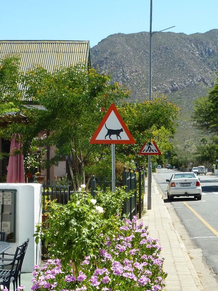 Beware of cats - National Road Sign and law enforced road rule in Montagu , South Africa. Nature loving folks us South Africans.