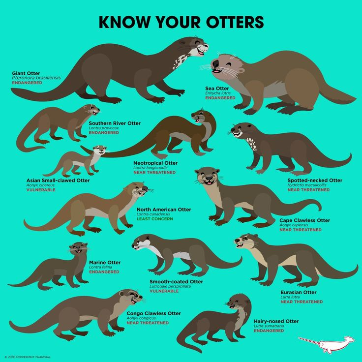 Know Your Otters