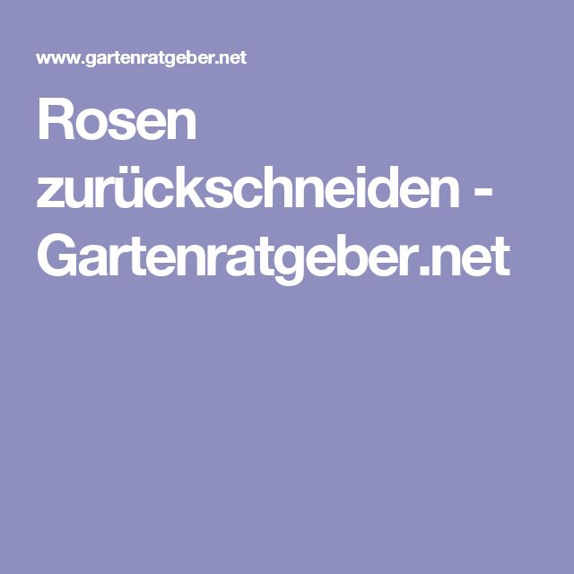 Rosen zurückschneiden - Gartenratgeber.net