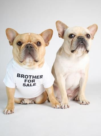 Brother For Sale Dog Tee Dog Shirt Dogs Tee French Bulldog